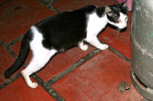 Cat and toad