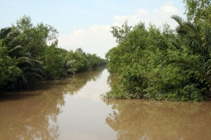 Cheap trees and water coconuts line a channel that cuts across an island in the Mekong Delta.