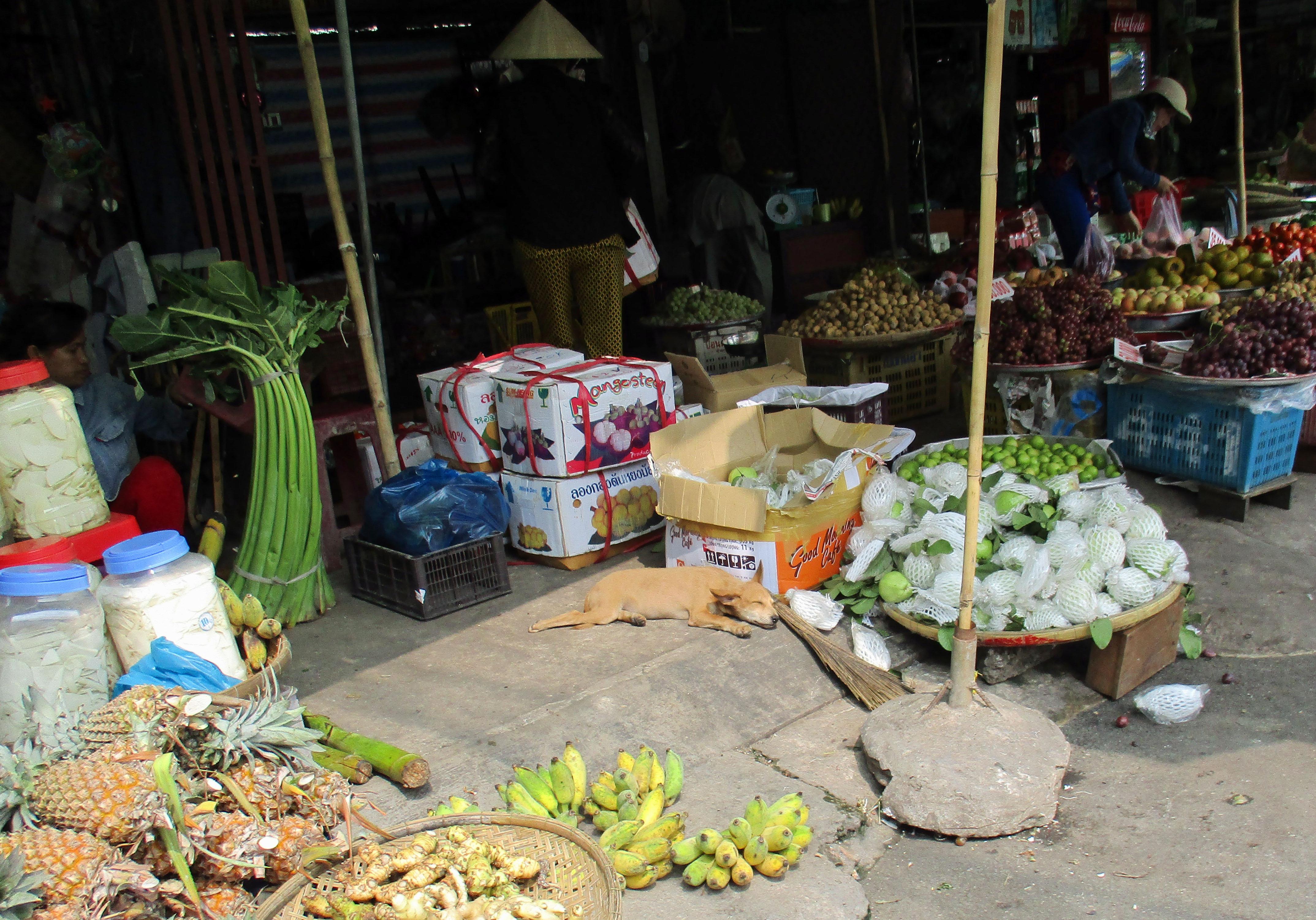 Dog sleeping at an outdoor market in Càu Mau.